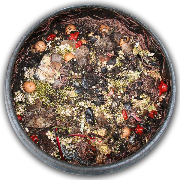 Small compost bin with ingredients and worms.