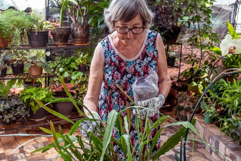 An eldery woman planting with compost.