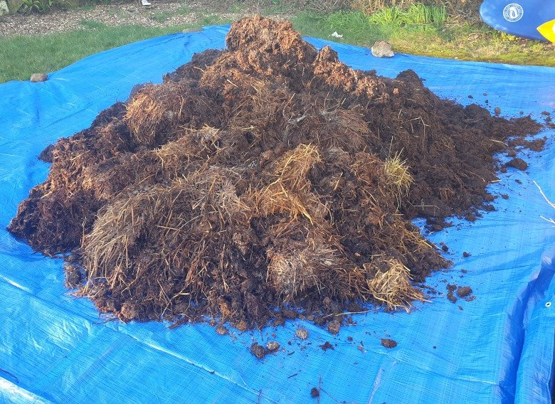 Manure on a blue tarpaulin before being added to compost.