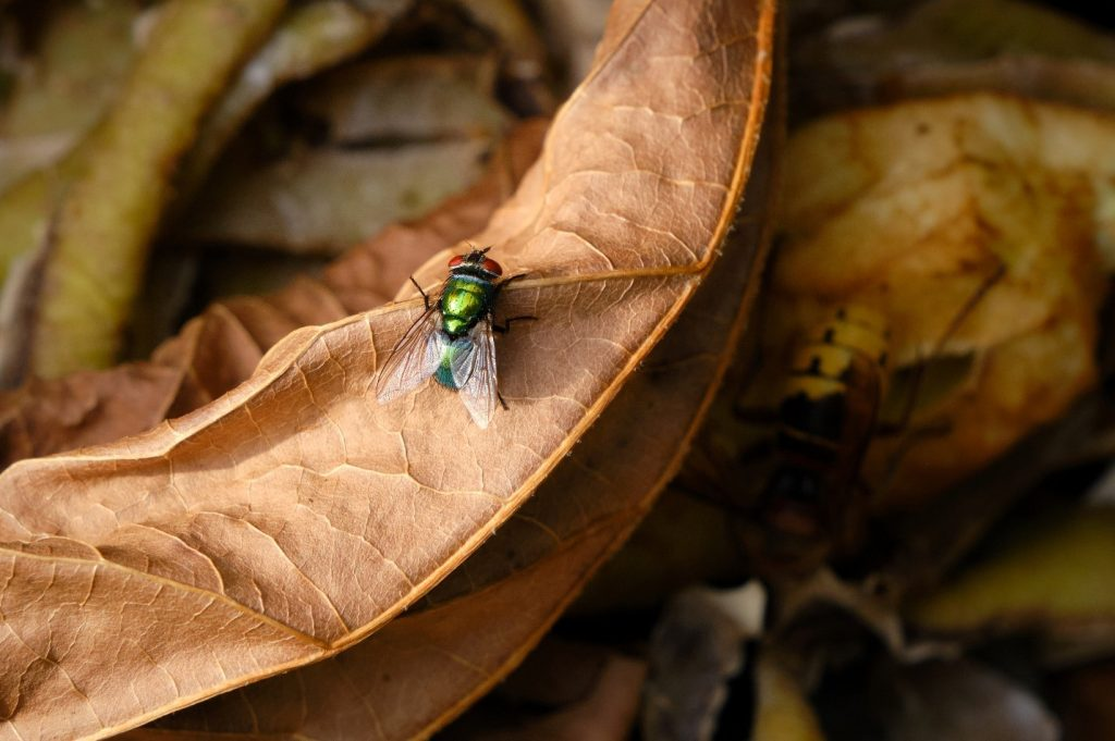Avoid Fruit Flies in Your Compost Bin