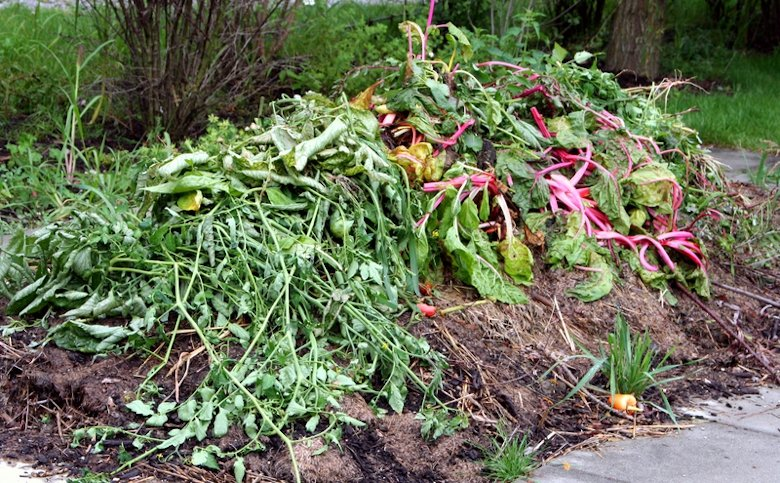 Compost materials from the garden.