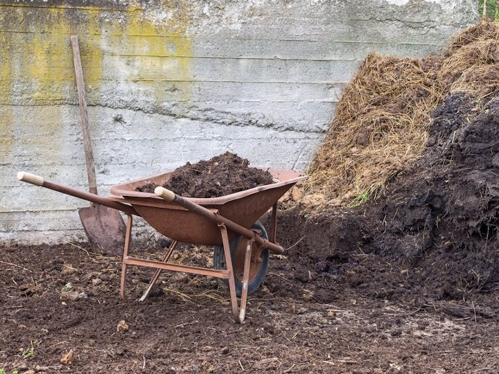Wheelbarrow besides manure heap.