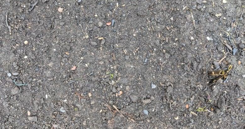 Soil after heavy rain.
